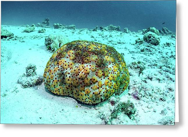 Cushion Star Greeting Card