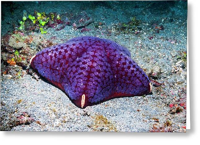 Cushion Starfish On Sea Bed Greeting Card by Georgette Douwma