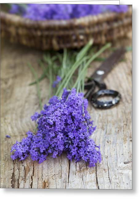Cut Lavender Greeting Card by Tim Gainey