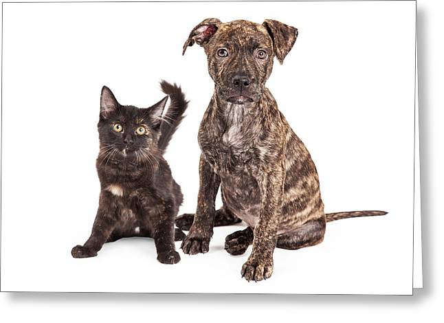 Cute Brindle Puppy And Kitten Greeting Card by Susan Schmitz