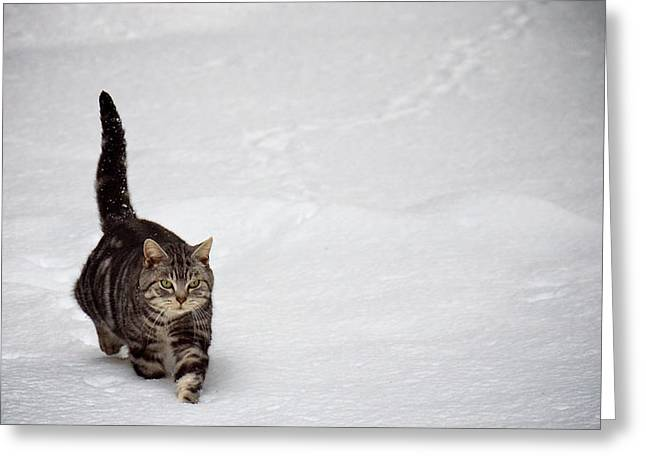 Cute Cat In Snow Greeting Card