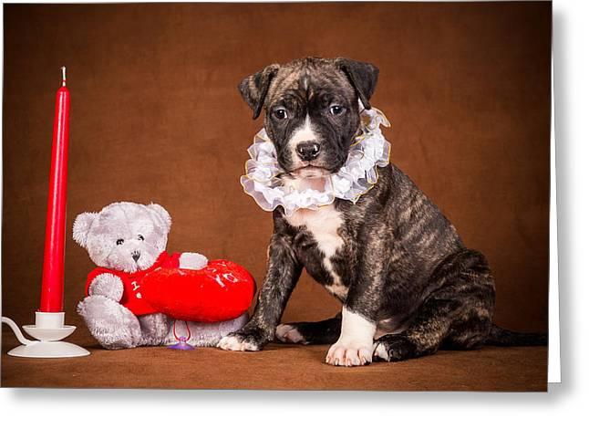 Cute Christmas Dog Greeting Card by Doc Braham