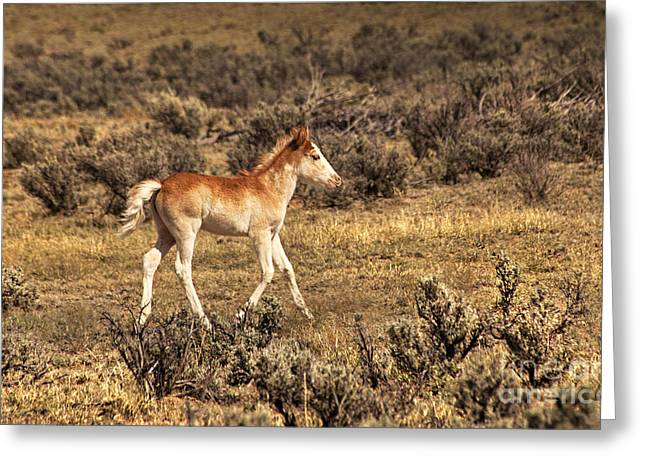 Cute Colt Wild Horse On Navajo Indian Reservation  Greeting Card
