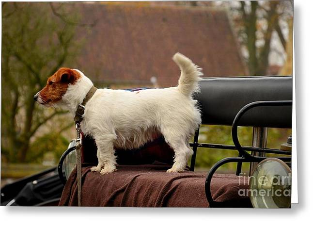 Cute Dog On Carriage Seat Bruges Belgium Greeting Card
