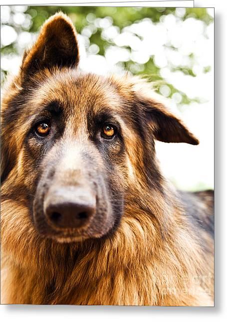 Cute Dog Portrait Greeting Card