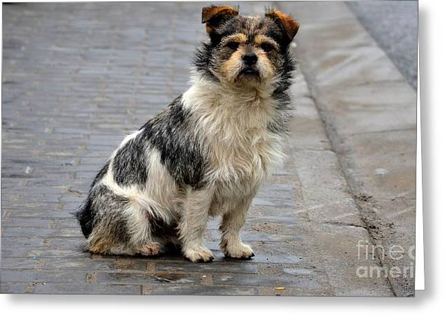 Cute Dog Sits On Pavement And Stares At Camera Greeting Card
