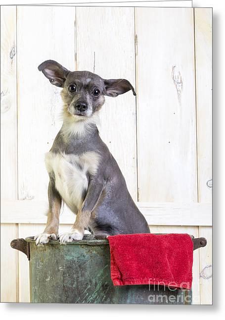 Cute Dog Washtub Greeting Card by Edward Fielding