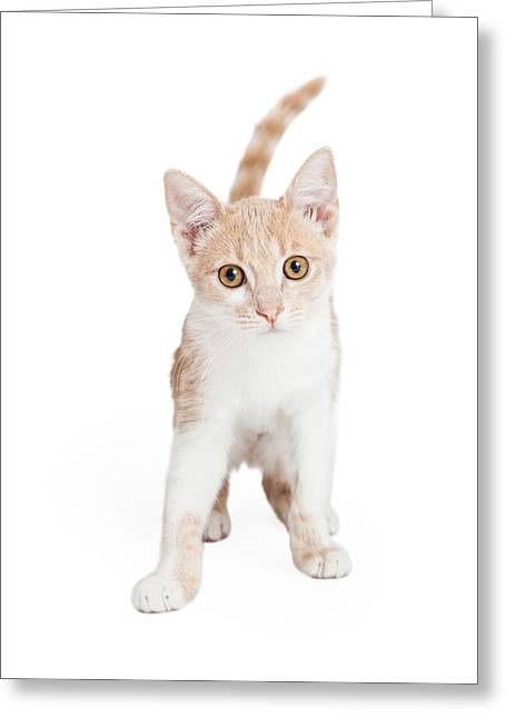 Cute Domestic Shorthair Kitten Standing  Greeting Card