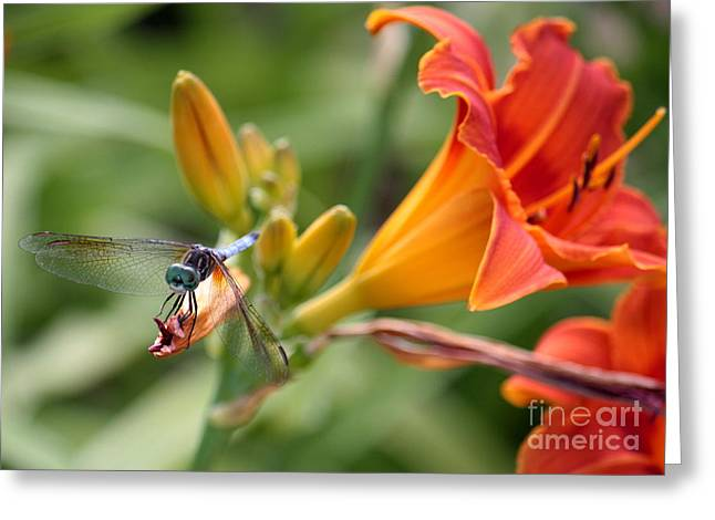 Cute Dragonfly On Orange Lilies Greeting Card