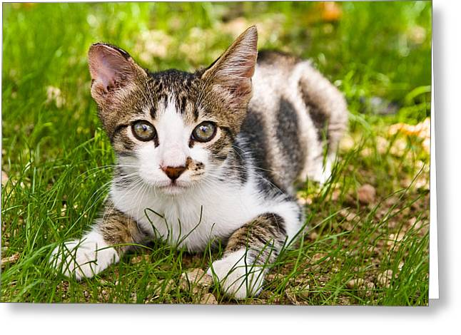 Cute Kitty In The Grass Greeting Card by Cristina-Velina Ion