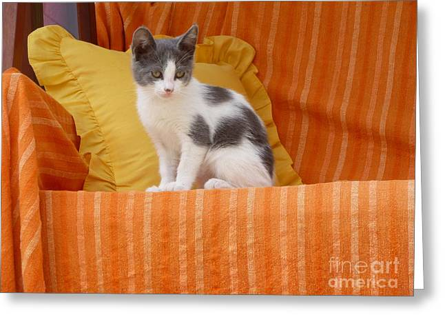 Cute Kitty Greeting Card by Vicki Spindler