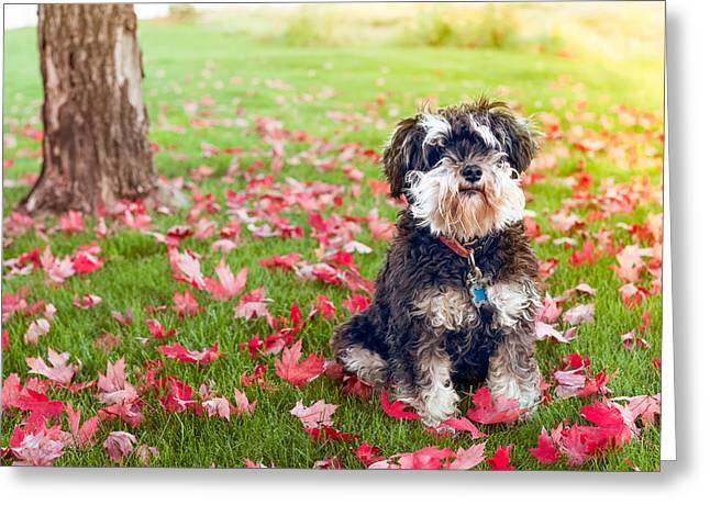 Cute Mini-schnauzer Dog Greeting Card