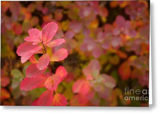 Cute Pink Plant Greeting Card by Jolanta Meskauskiene