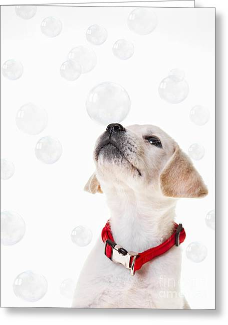 Cute Puppy With A Soap Bubble On His Nose. Greeting Card by Diane Diederich