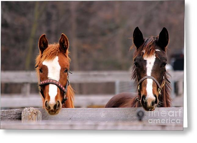 Cute Yearlings Greeting Card