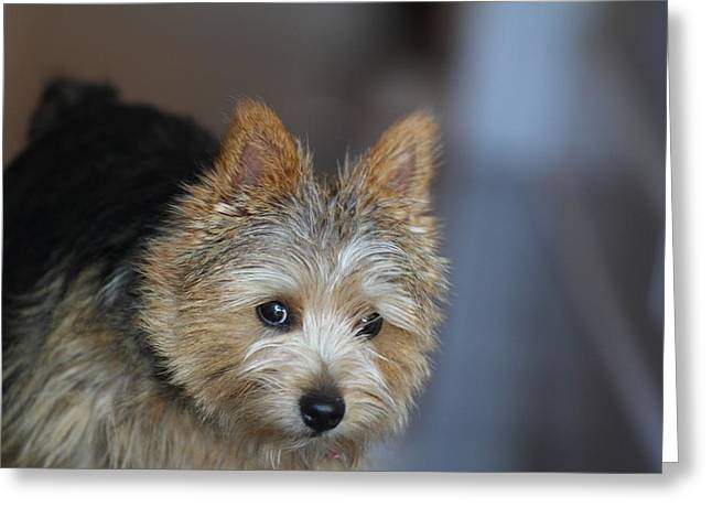 Cutest Dog Ever - Animal - 011321 Greeting Card by DC Photographer