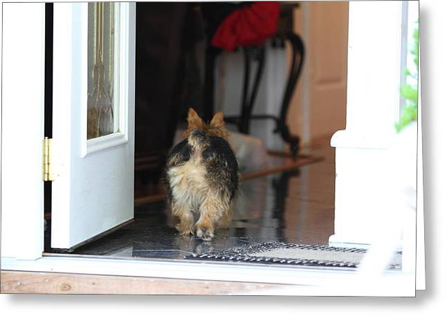 Cutest Dog Ever - Animal - 011329 Greeting Card by DC Photographer
