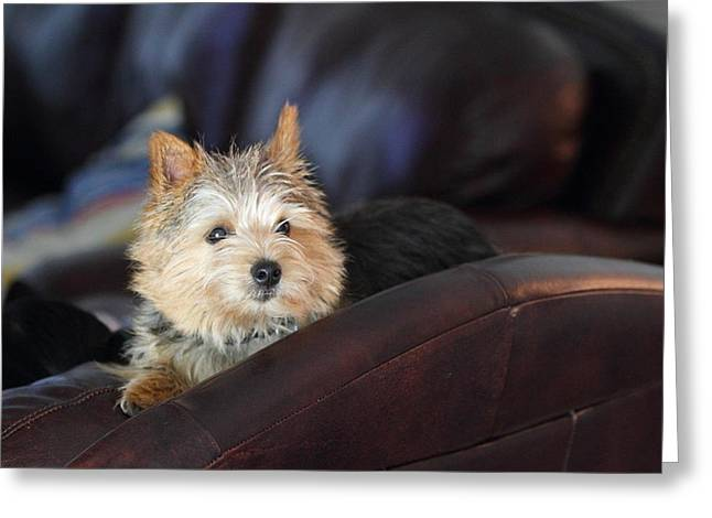 Cutest Dog Ever - Animal - 011330 Greeting Card by DC Photographer