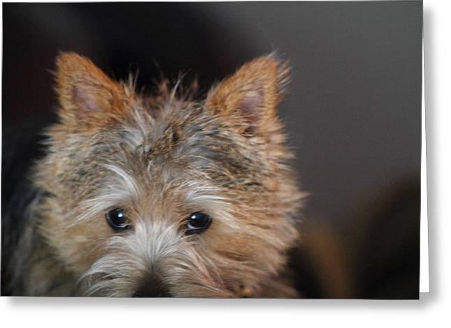 Cutest Dog Ever - Animal - 011332 Greeting Card