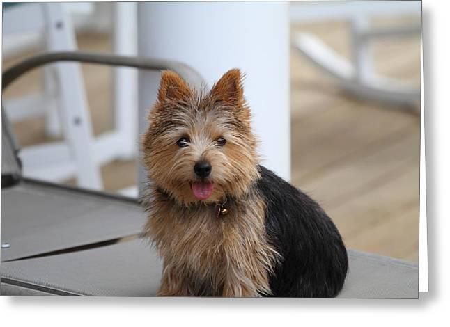 Cutest Dog Ever - Animal - 011335 Greeting Card
