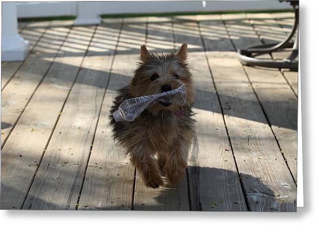 Cutest Dog Ever - Animal - 01134 Greeting Card by DC Photographer