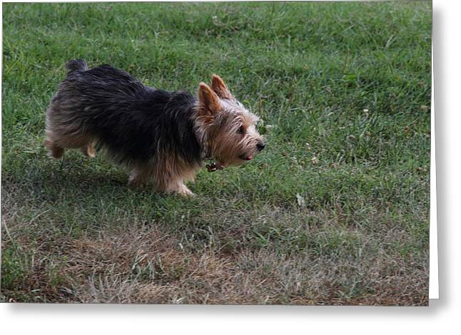 Cutest Dog Ever - Animal - 011344 Greeting Card by DC Photographer