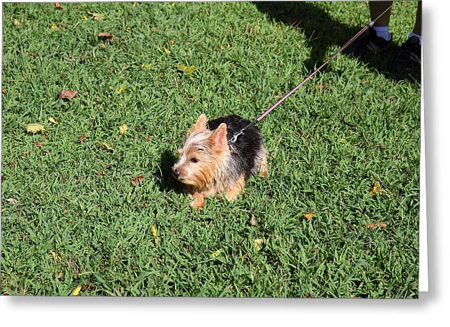 Cutest Dog Ever - Animal - 011349 Greeting Card by DC Photographer