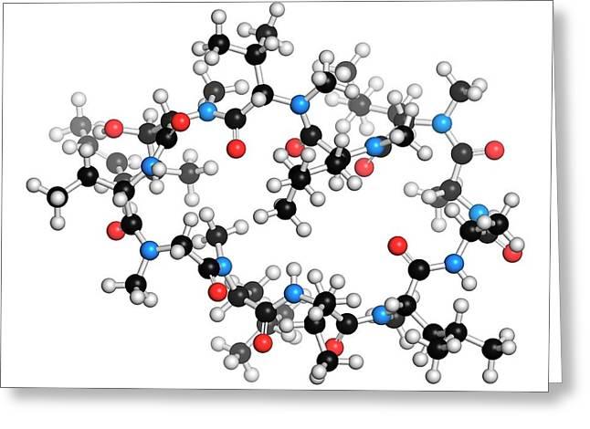 Cyclosporine Immunosuppressant Drug Greeting Card by Molekuul