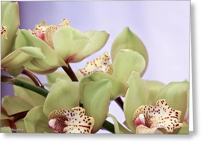 Cymbidium Orchids  Greeting Card