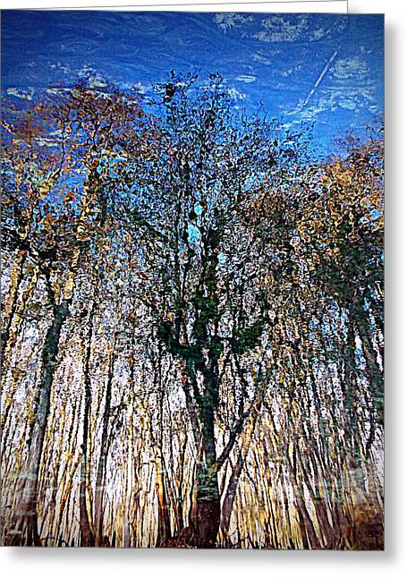 Cypress Abstract 1 Greeting Card by Sheri McLeroy