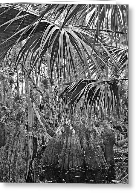 Cypress And Palm Canopy. Green Swamp Wildlife Management Area Polk County.    Greeting Card