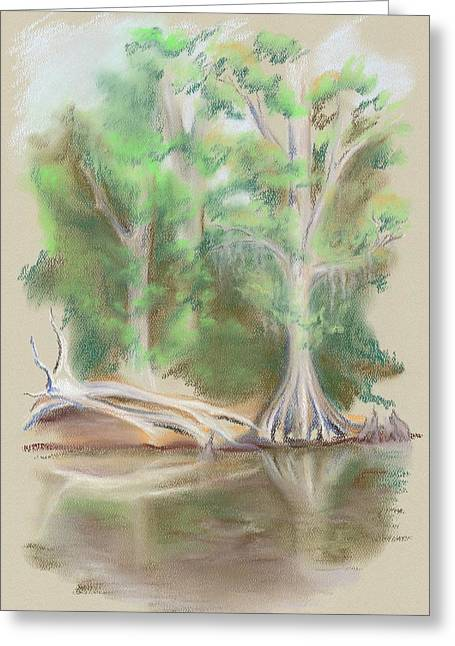 Cypress By The Waccamaw River Greeting Card by MM Anderson