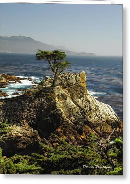 Cypress Greeting Card by Donna Blackhall