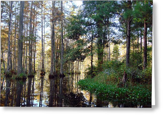 Greeting Card featuring the photograph Cypress Gardens 2 by Ellen Tully