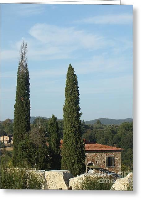 Cypress In Rapolano Greeting Card