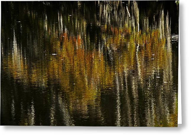 Greeting Card featuring the photograph Cypress In Reflection by Andy Crawford