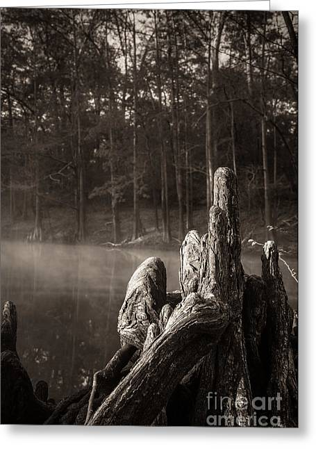 Cypress Knees In Sepia Greeting Card