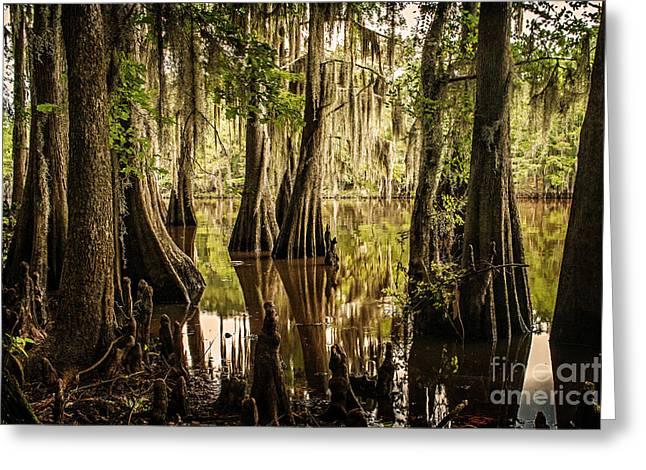 Cypress Knees On Caddo Lake Greeting Card by Tamyra Ayles