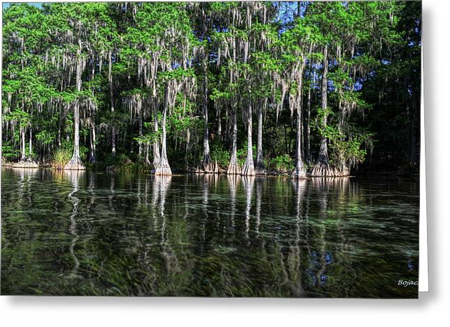 Cypress On Rainbow Greeting Card by Bob Jackson