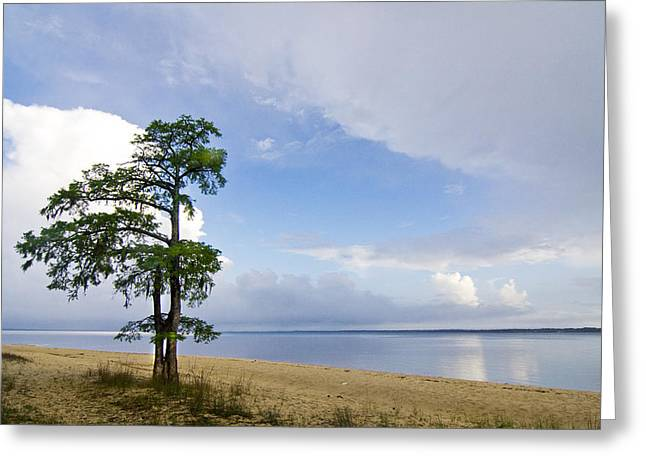 Greeting Card featuring the photograph Cypress On The Neuse by Bob Decker