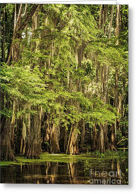 Cypress Reflection On Caddo Lake II Greeting Card by Tamyra Ayles