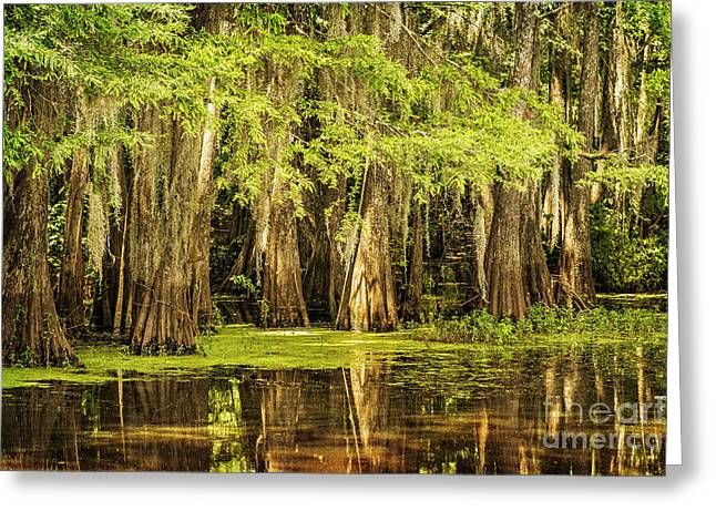 Cypress Reflection On Caddo Lake Greeting Card by Tamyra Ayles