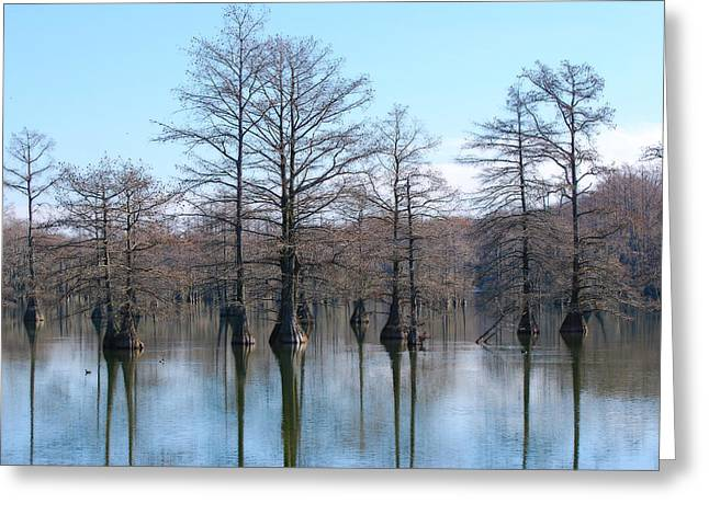 Cypress Reflections Greeting Card