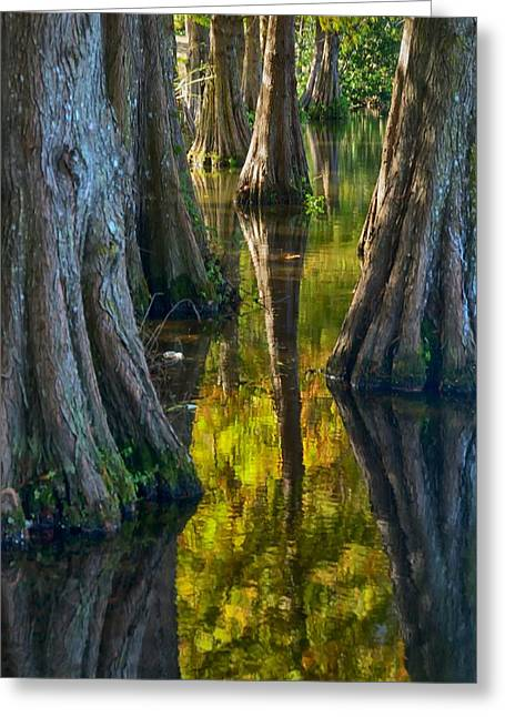 Cypress Reflections Greeting Card by Rob Wilson