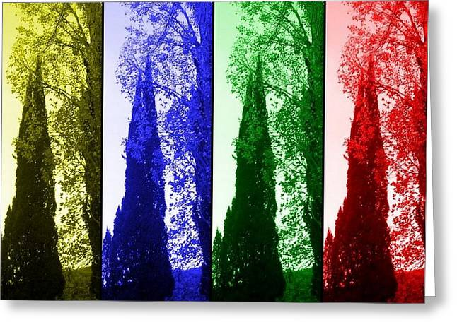 Cypress Greeting Card by Rick Todaro