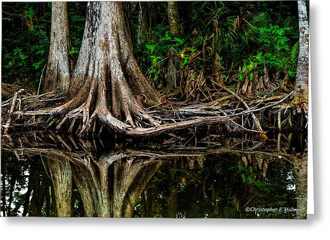 Cypress Roots Greeting Card by Christopher Holmes