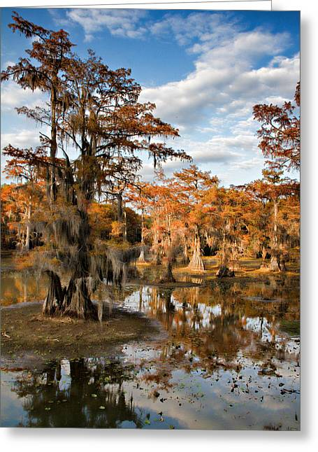 Greeting Card featuring the photograph Cypress Rust by Lana Trussell