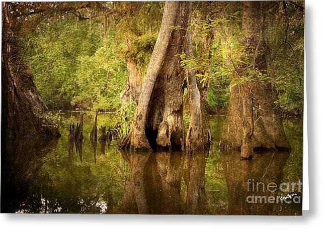 Cypress  Greeting Card by Scott Pellegrin
