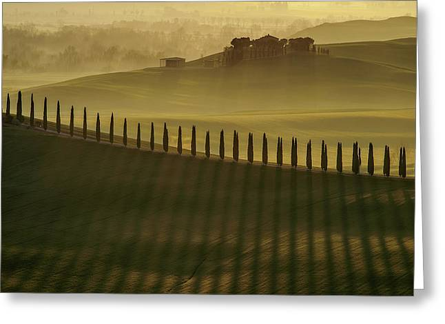 Cypress Shadows Greeting Card