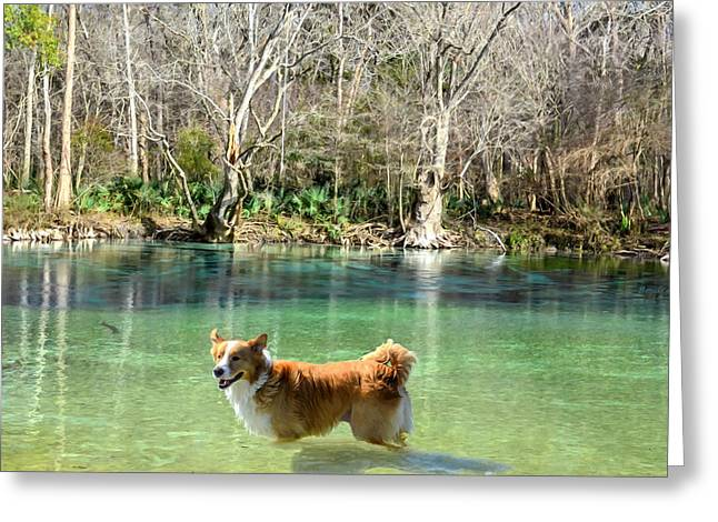 Cypress Spring Pup Greeting Card by Bob Jackson